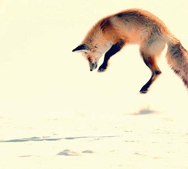 Příhody lišky Bystroušky